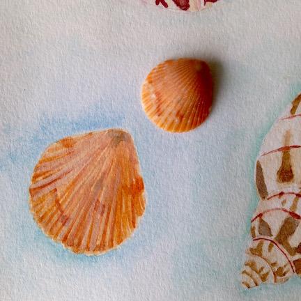 shell5